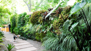 Living Privacy Fence Tropical Lush Hedge